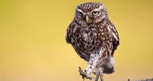 Мультики про сову